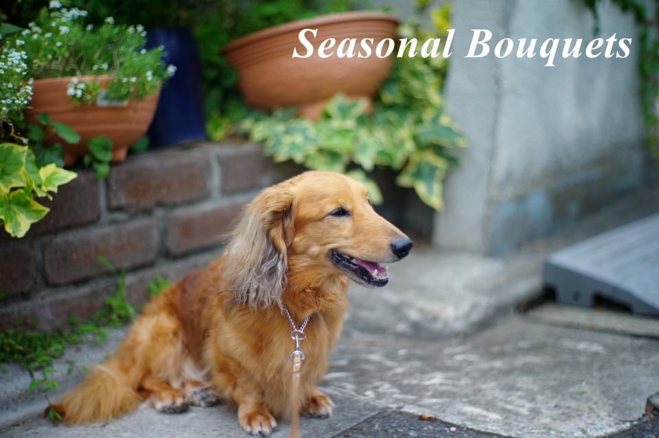 Seasonal Bouquets